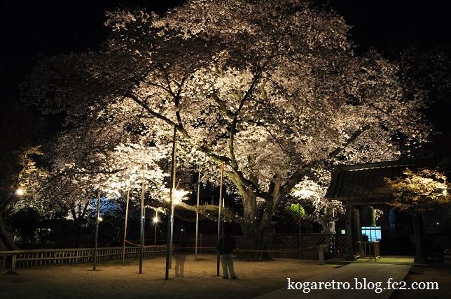 満福寺の夜桜