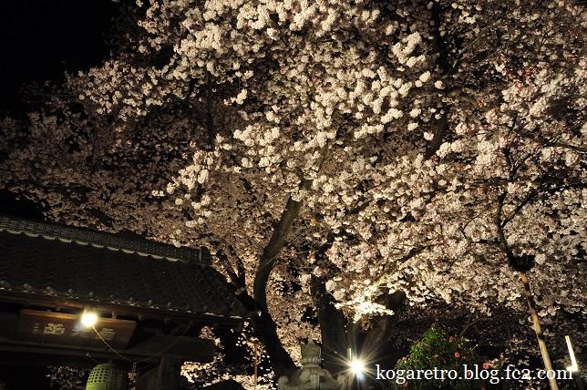 満福寺の夜桜2