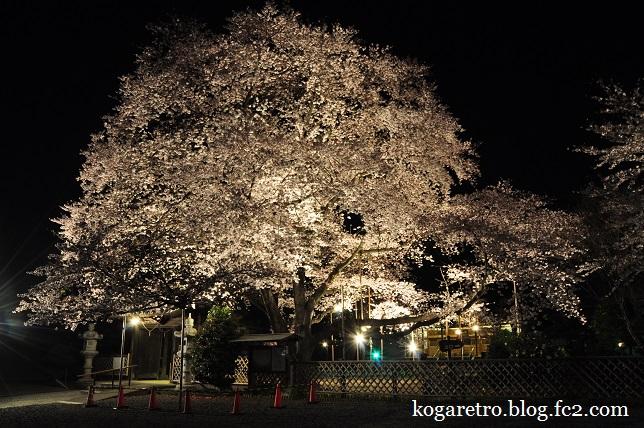 満福寺の夜桜3