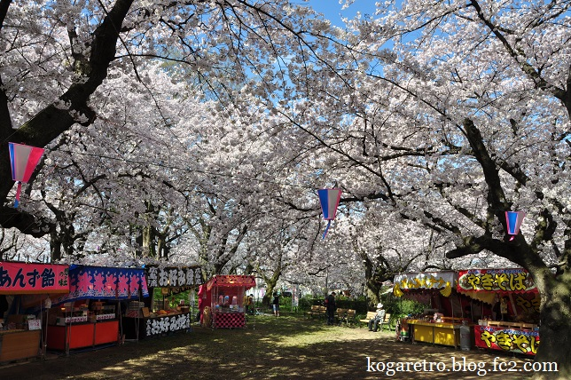 権現堂の桜まつり5