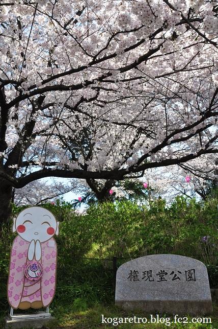 権現堂の桜まつり