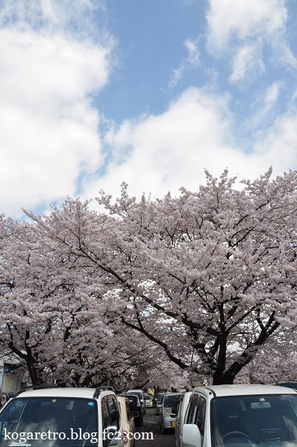 三桜工業の桜2