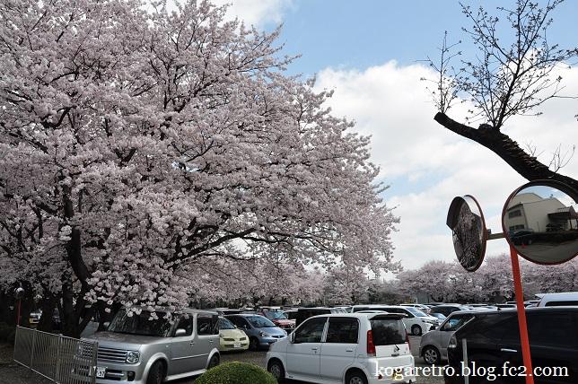 三桜工業の桜3