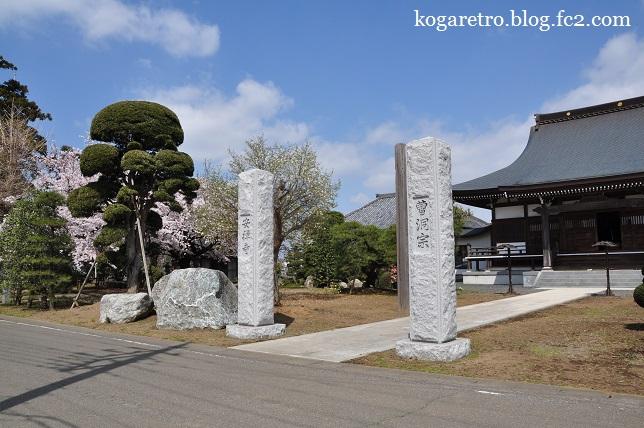 安禅寺の桜