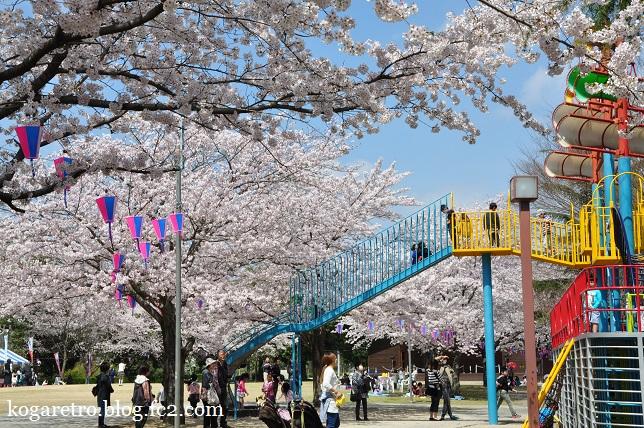 ネーブルパークの桜まつり5