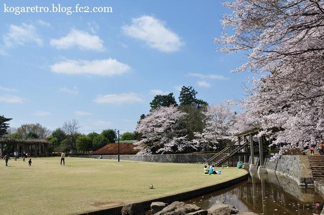 ネーブルパークの桜まつり6