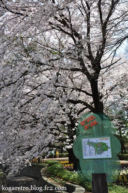 ネーブルパークの桜まつり