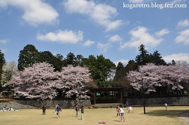 ネーブルパークの桜まつり8