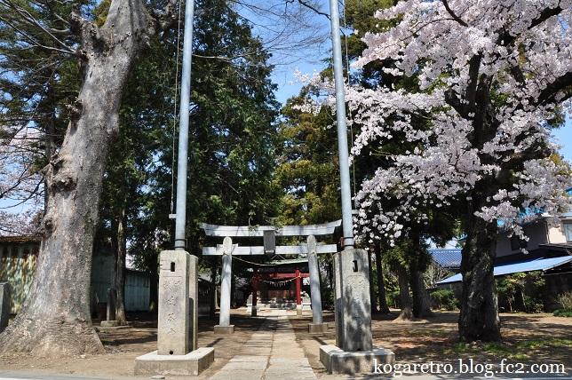 香取神社の桜