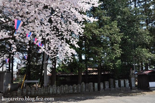 香取神社の桜3