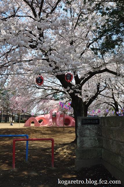 タコ公園の桜