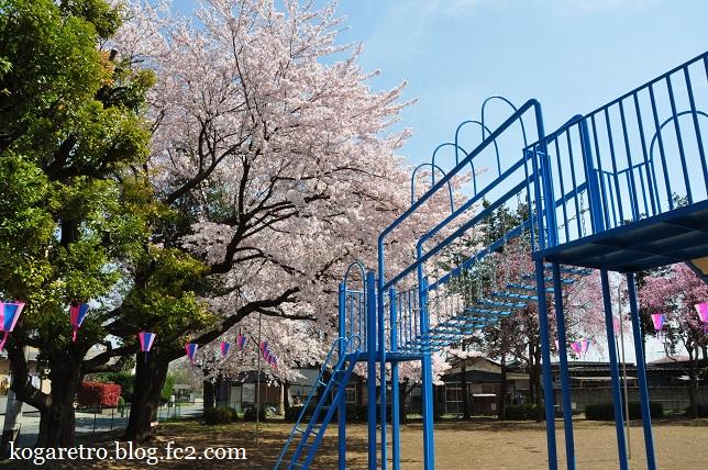 タコ公園の桜2