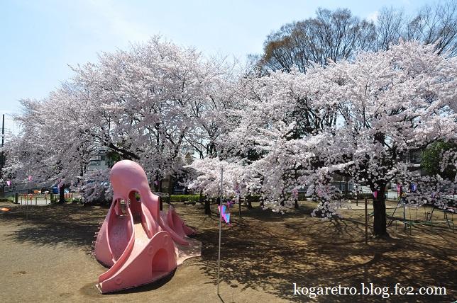 タコ公園の桜3