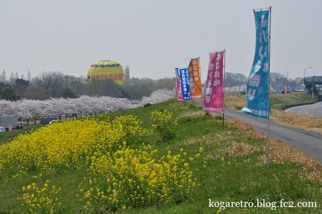 渡良瀬遊水地の桜2