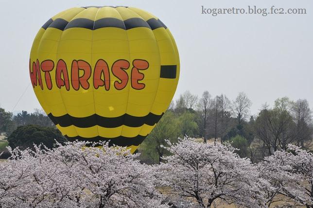 渡良瀬遊水地の桜3