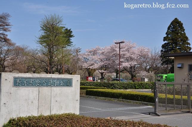 野木町総合運動公園の桜