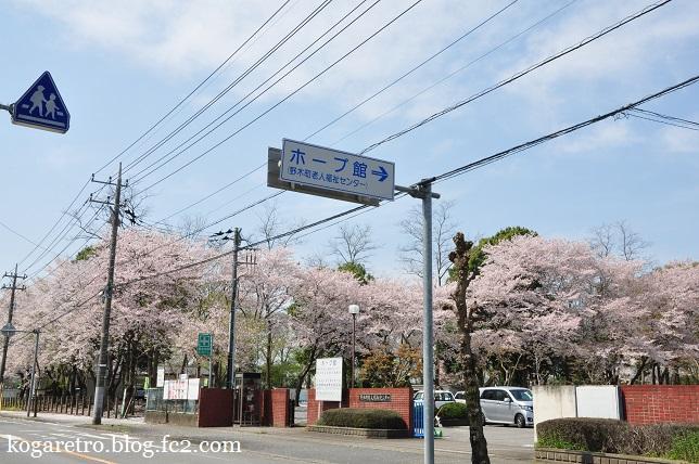 野木町ホープ館の桜