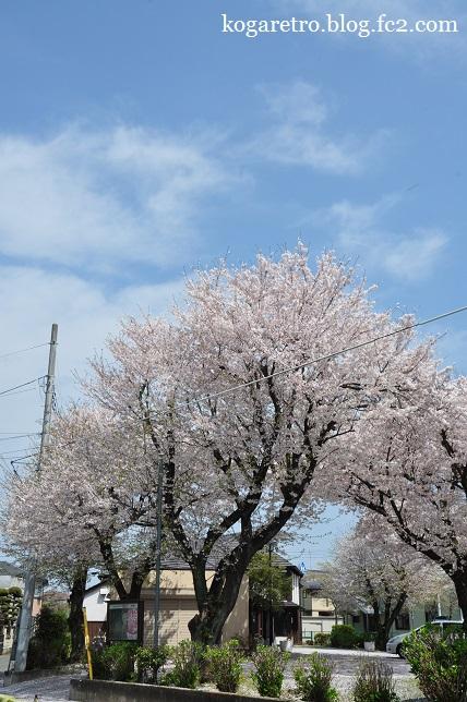 ふれあいの家の桜2