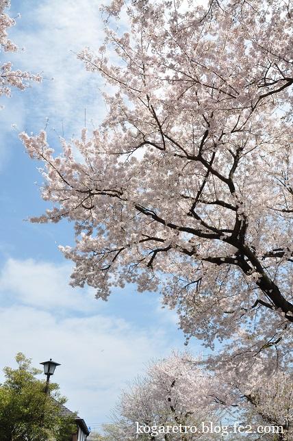 ふれあいの家の桜4