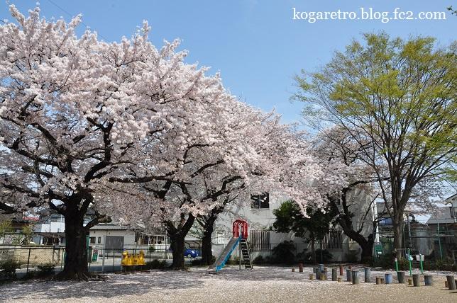三角公園の桜2