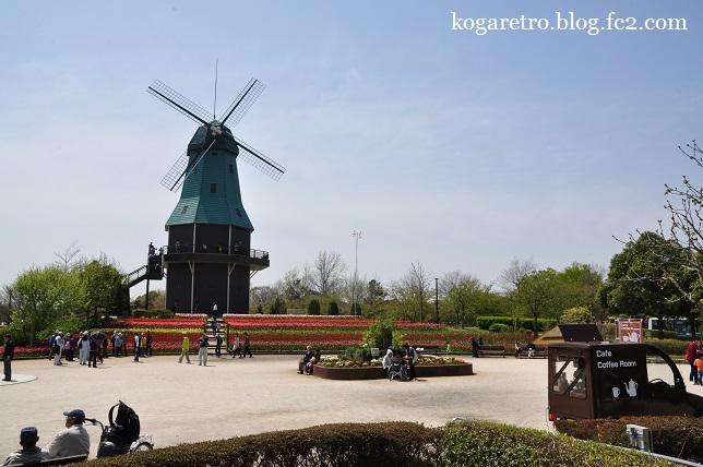 霞ヶ浦の風車とチューリップ