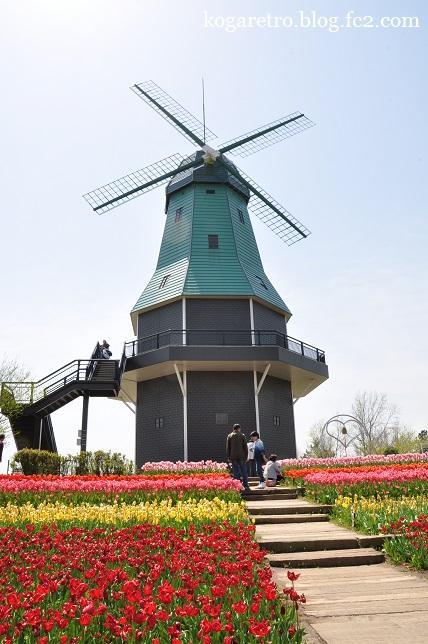 霞ヶ浦の風車とチューリップ3