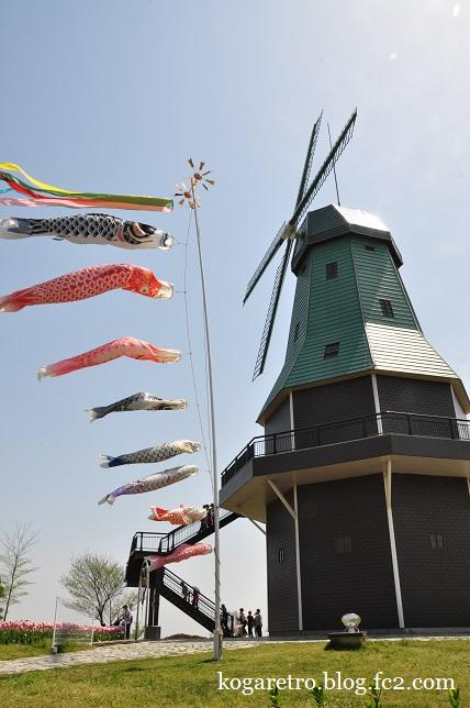 霞ヶ浦の風車とチューリップ7