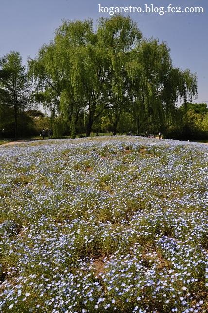 ザ・トレジャーガーデンの芝桜3