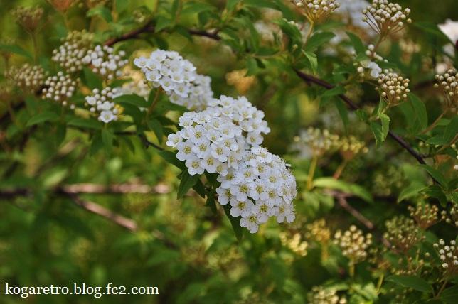 ザ・トレジャーガーデンの芝桜5