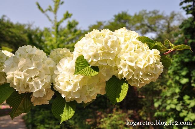 ザ・トレジャーガーデンの芝桜6