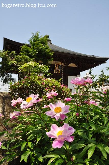 永光寺は花の寺2