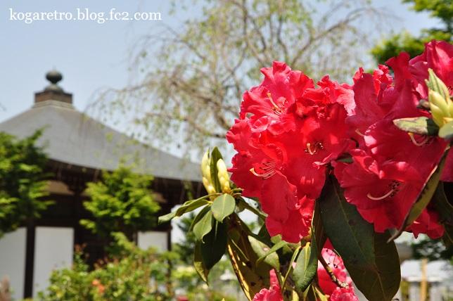 永光寺は花の寺3