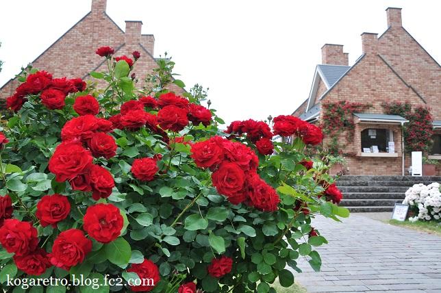 ザ・トレジャーガーデンのバラ