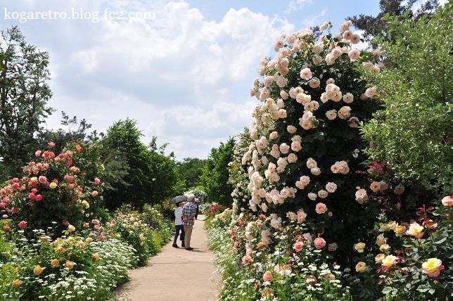 ザ・トレジャーガーデンのバラ5