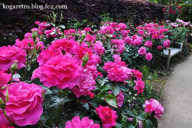 ザ・トレジャーガーデンのバラ8