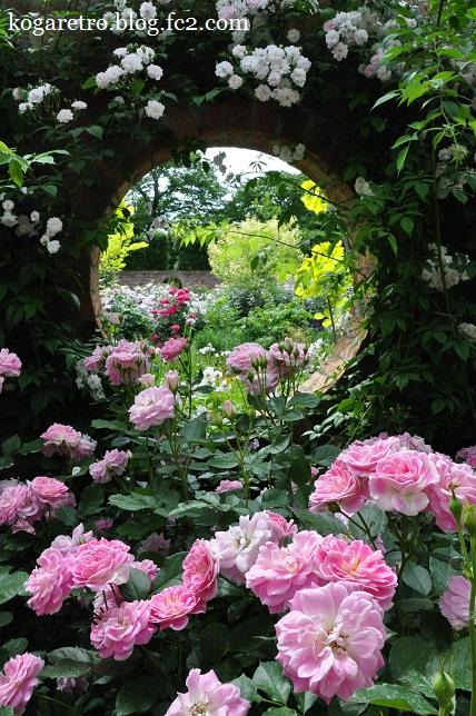 ザ・トレジャーガーデンのバラ10