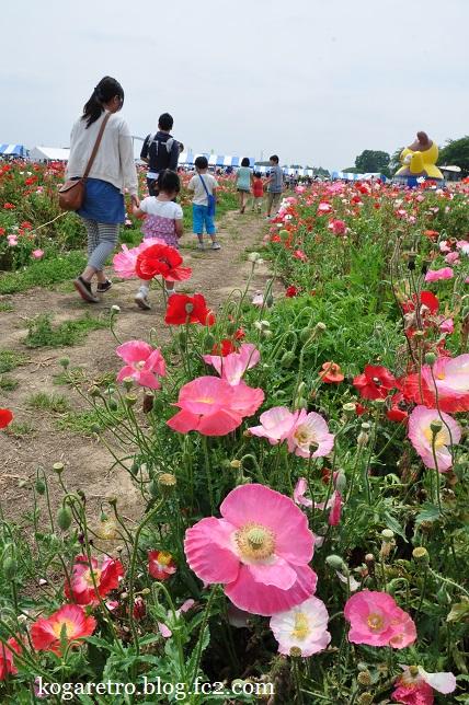小貝川フラワーフェスティバル6