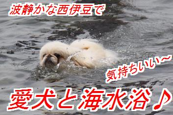 umimiro1_201507040249312f4.jpg