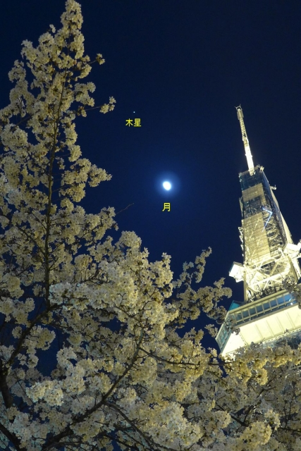B20150330P_桜とテレビ塔と月_P1050609