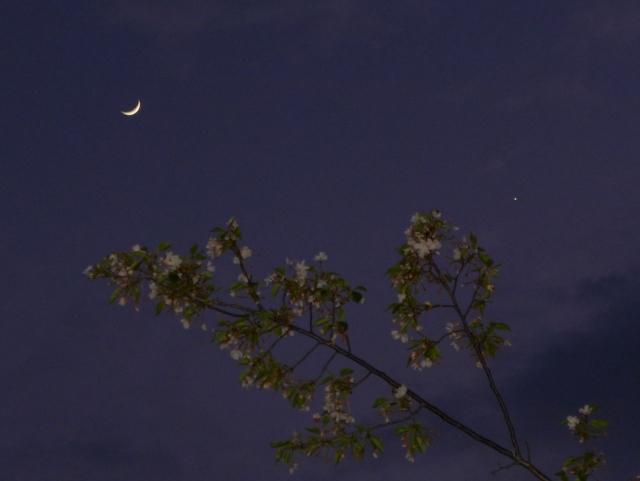 B20150422P_月と金星_P1050887