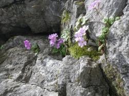 岩場に咲く (2)