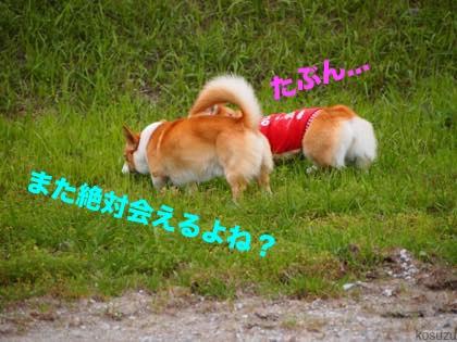 15_20150427210309dd1.jpg