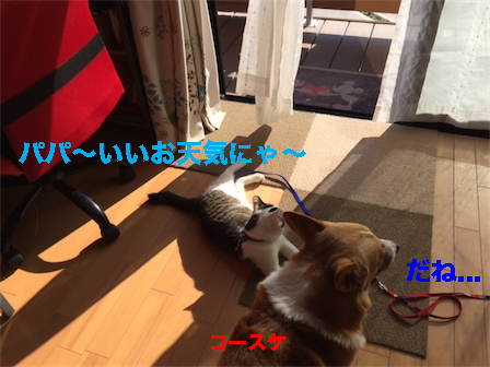 1_201501052118080a0.jpg