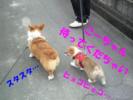 勝手にお散歩デビュー7