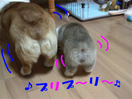 2人でお散歩9jpg