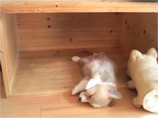 コー太の寝どこでネンネ