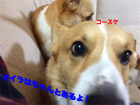 2_20141217095501eee.jpg