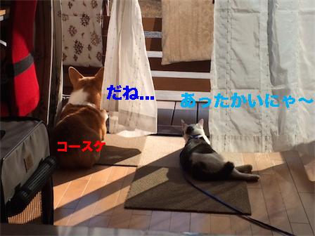 2_20150105211809dea.jpg