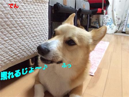 3_20150111225303e06.jpg