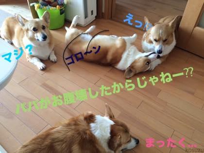 3_201503230938233c1.jpg